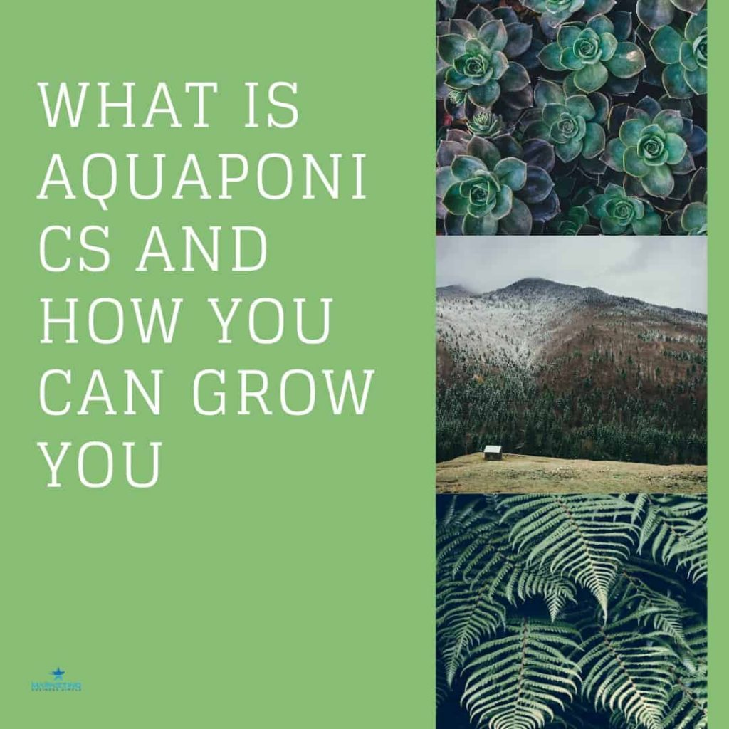 What Is Aquaponics And How You Can Grow Your Own Organic Vegetables