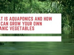 What Is Aquaponics And How You Can Grow You