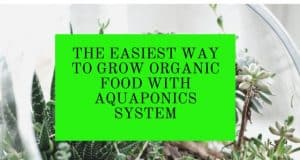 The Easiest Way to Grow Organic Food with Aquaponics System